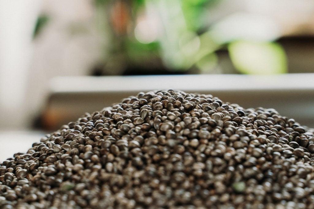 Seed-12-1024x683