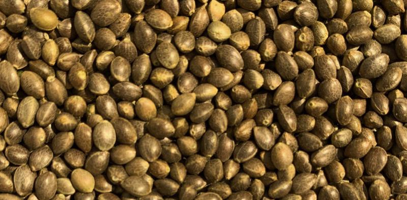 Seeds_banner